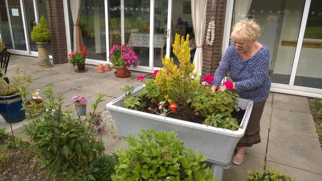 raised planter communal garden