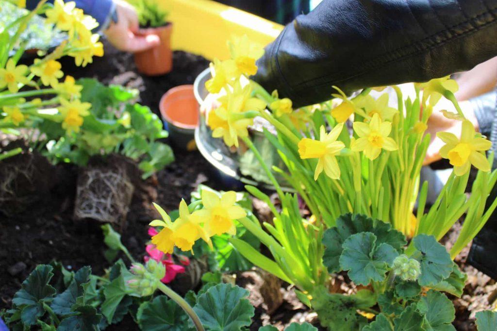 spring flowers in raised planter